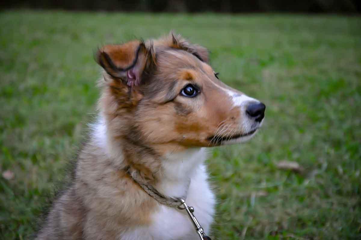 Glinny・Ohio・Family dog