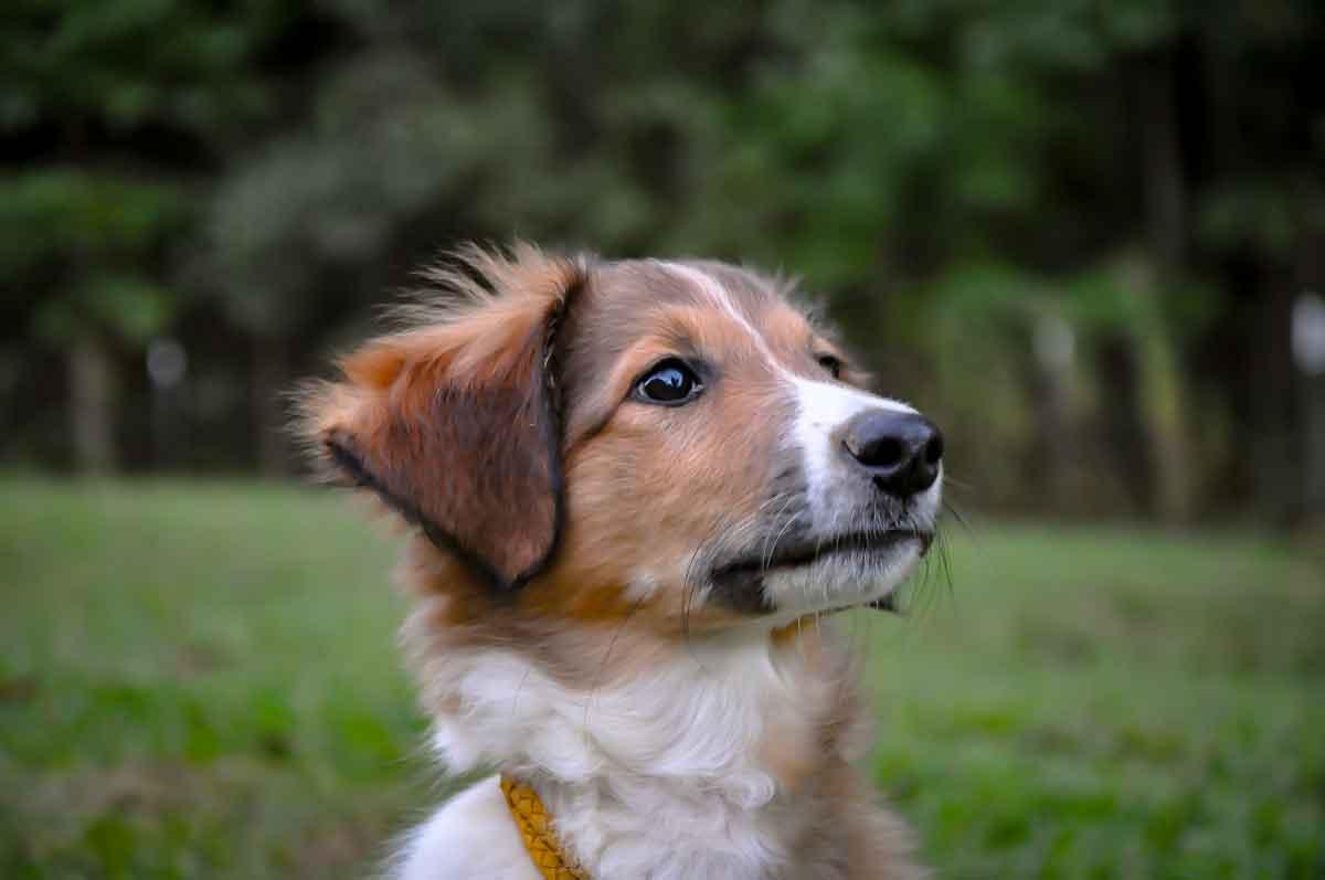 Aurie・Virginia・Family dog
