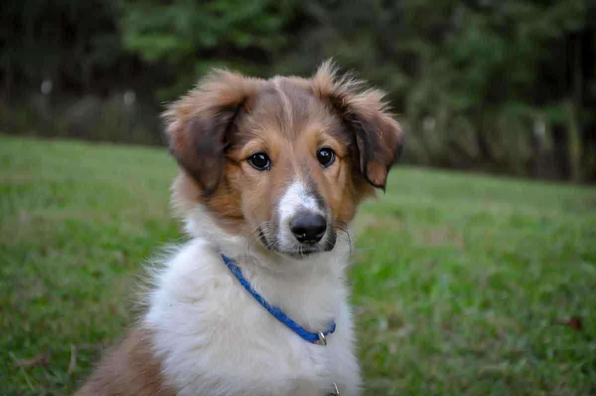 Millie・Texas・Family dog