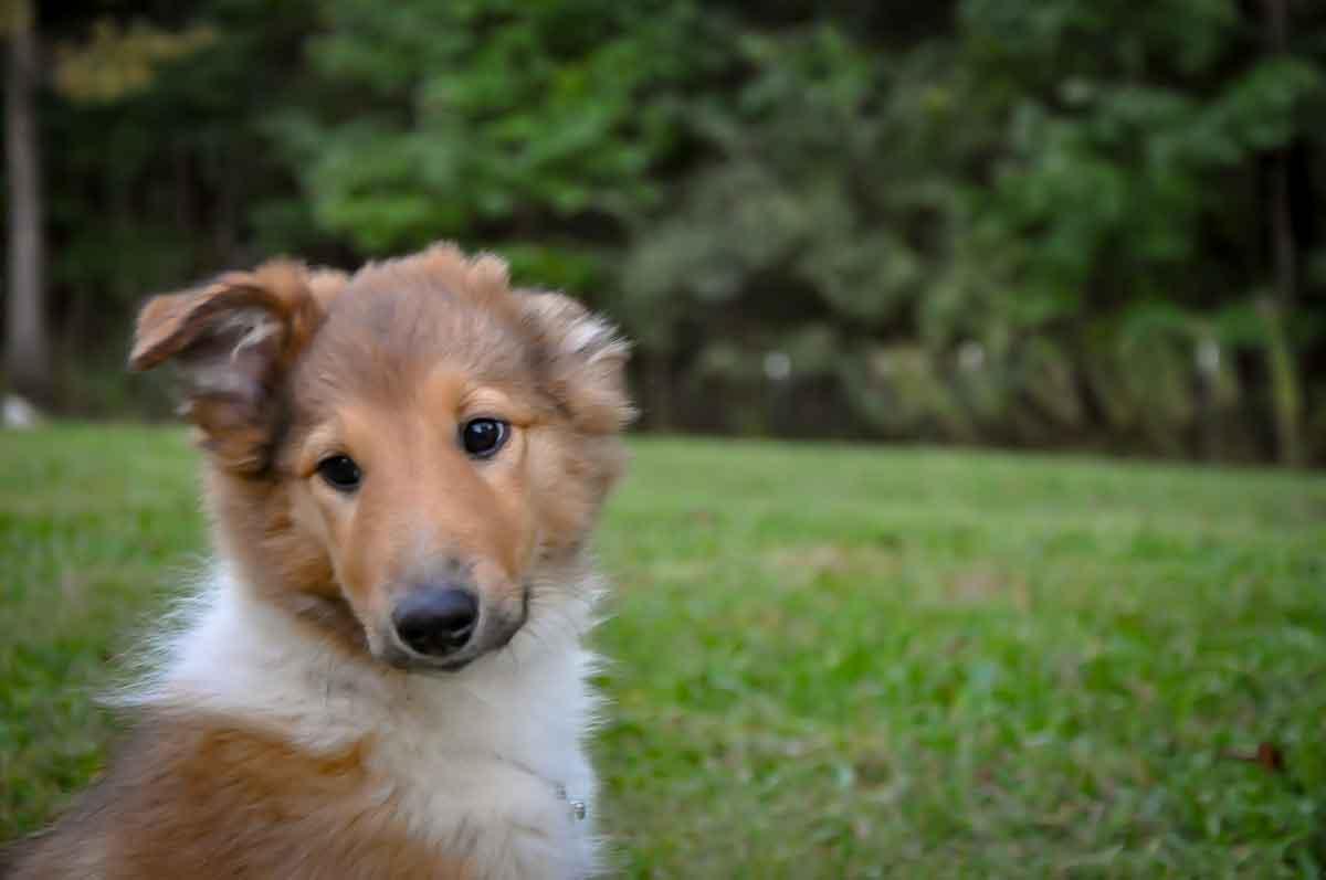 Wendy・California・Family dog