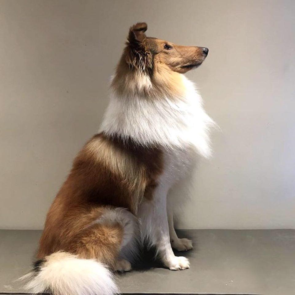 Sitting profile