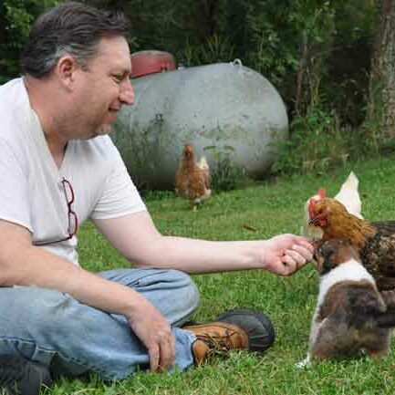 4 week old Rosewyn Scotch Collie pups meeting chickens